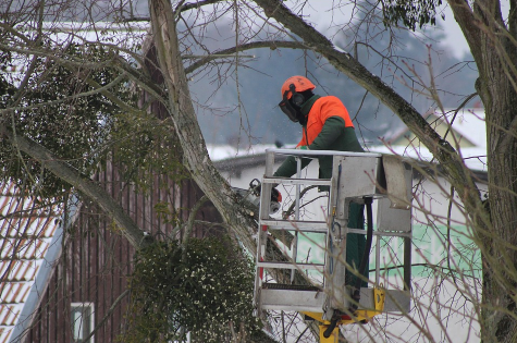 this is an image if tree pruning in mission viejo
