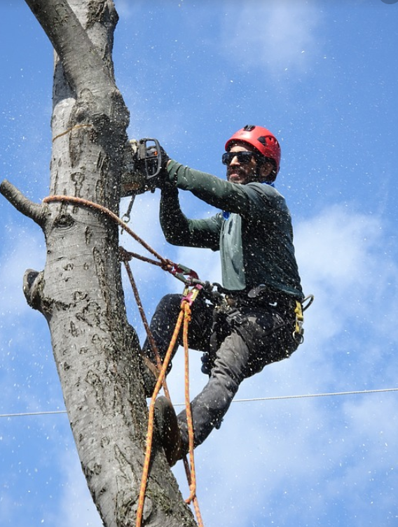 this is an image of tree removal in mission viejo