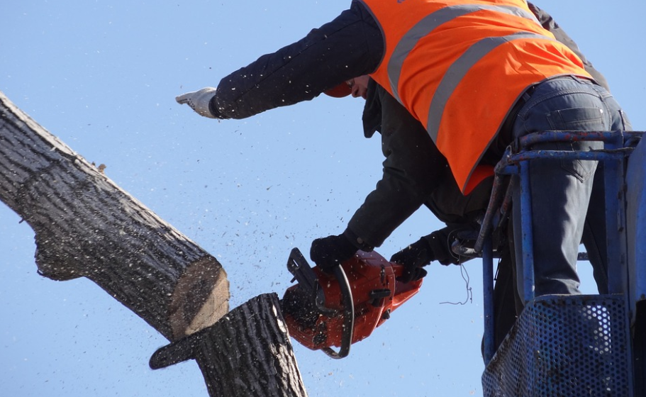 this is an image of tree service in mission viejo