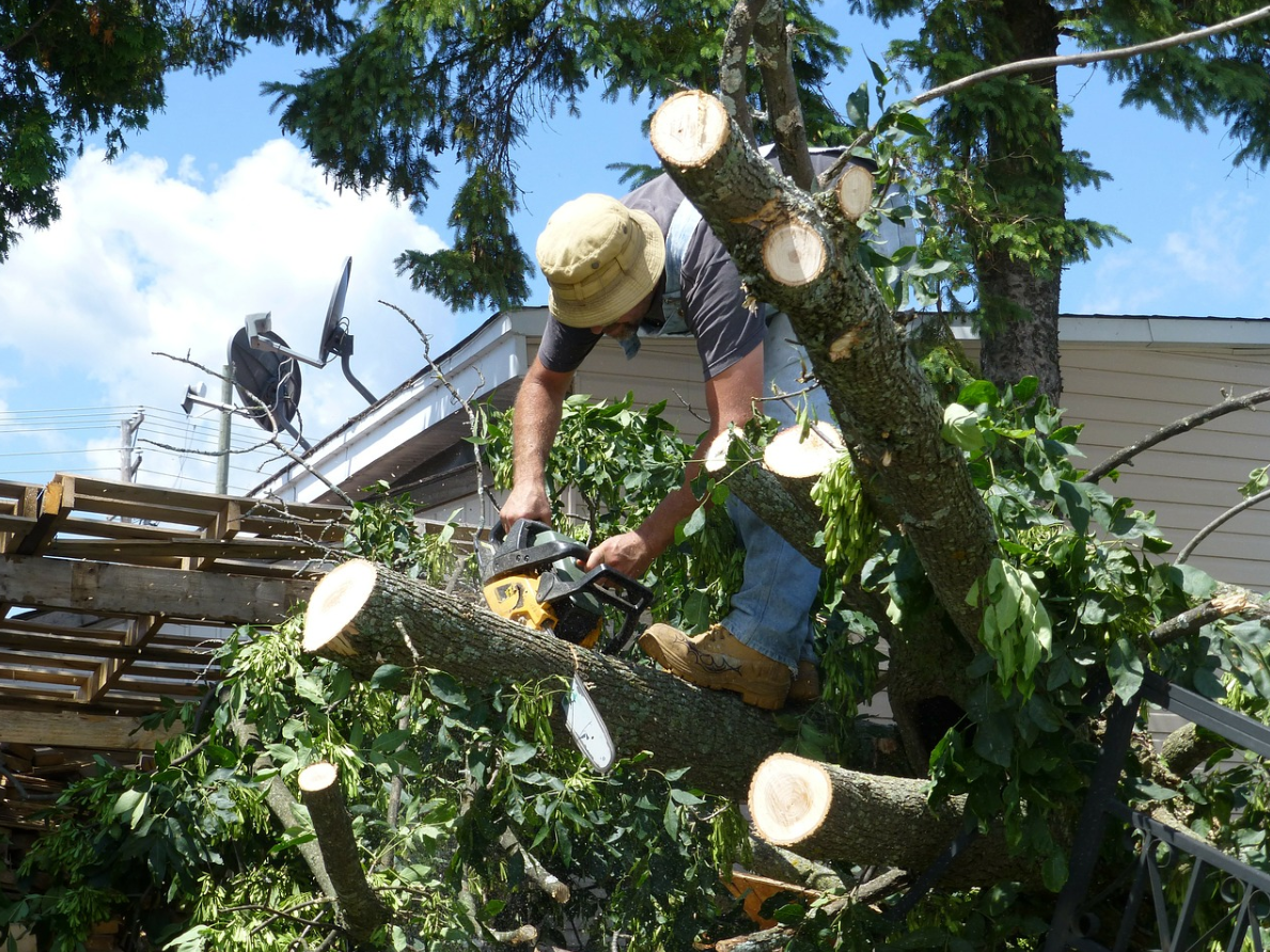 this is an image of tree trimming in mission viejo