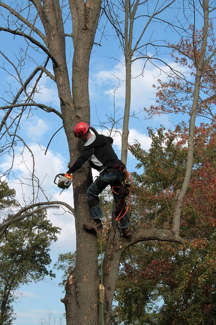 An image of Arborist in Mission Viejo