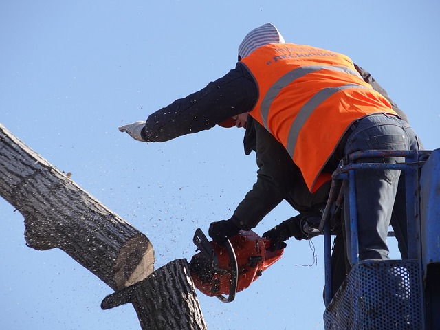 An image of commercial tree service in Mission Viejo, CA.