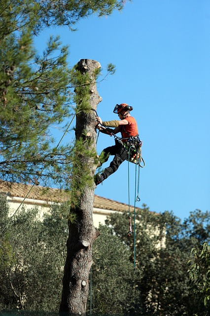 An image of residential tree service in Mission Viejo, CA.